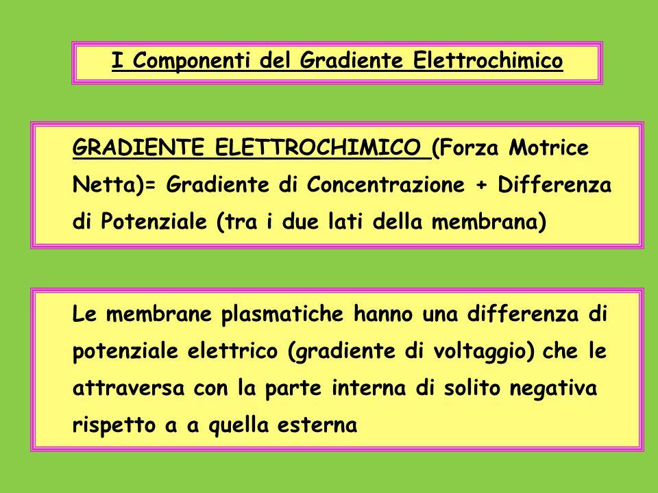 I Componenti del Gradiente Elettrochimico