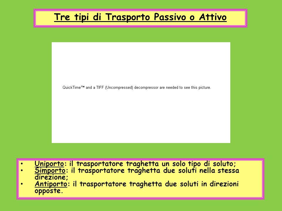 Tre tipi di Trasporto Passivo o Attivo