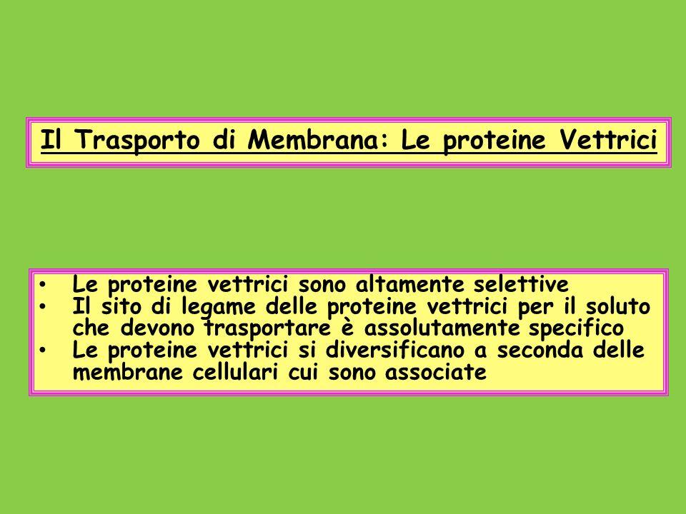 Il Trasporto di Membrana: Le proteine Vettrici
