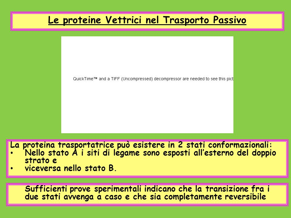 Le proteine Vettrici nel Trasporto Passivo