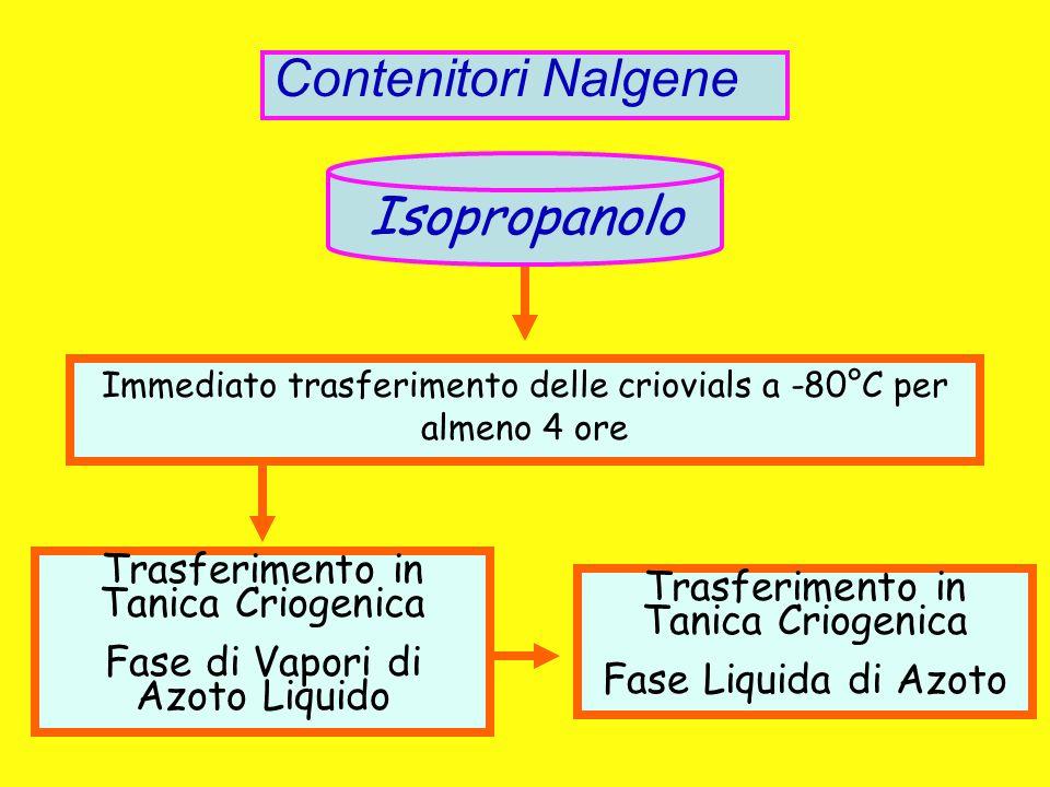 Contenitori Nalgene Isopropanolo Trasferimento in Tanica Criogenica