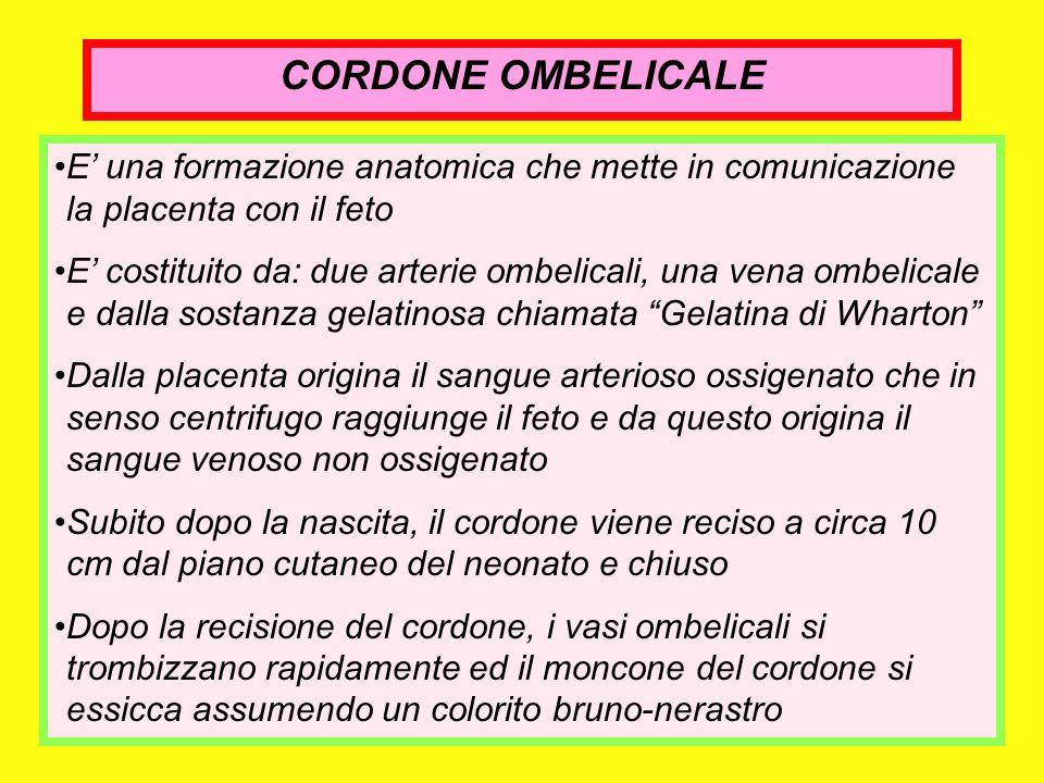 CORDONE OMBELICALE E' una formazione anatomica che mette in comunicazione la placenta con il feto.