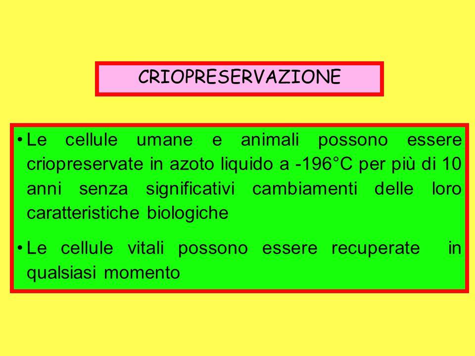 CRIOPRESERVAZIONE