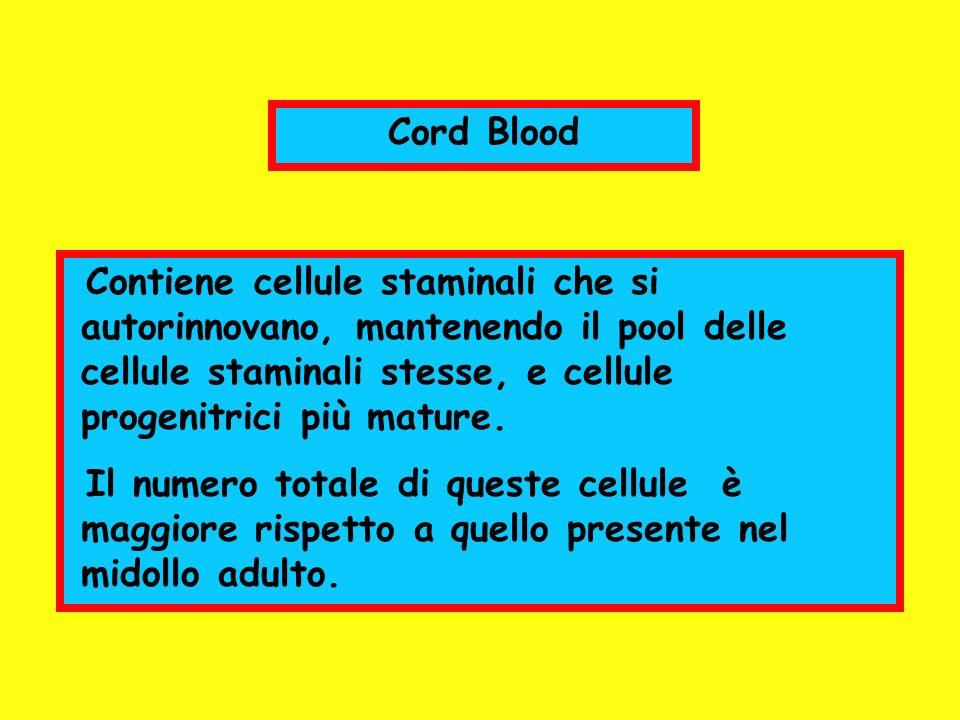 Cord Blood Contiene cellule staminali che si autorinnovano, mantenendo il pool delle cellule staminali stesse, e cellule progenitrici più mature.