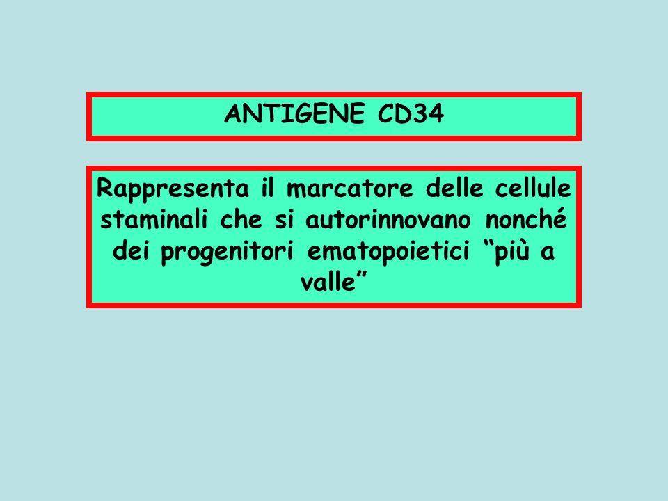 ANTIGENE CD34 Rappresenta il marcatore delle cellule staminali che si autorinnovano nonché dei progenitori ematopoietici più a valle