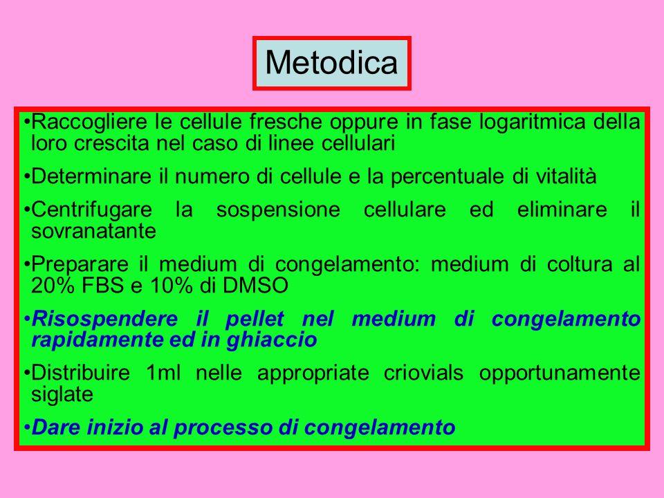 Metodica Raccogliere le cellule fresche oppure in fase logaritmica della loro crescita nel caso di linee cellulari.