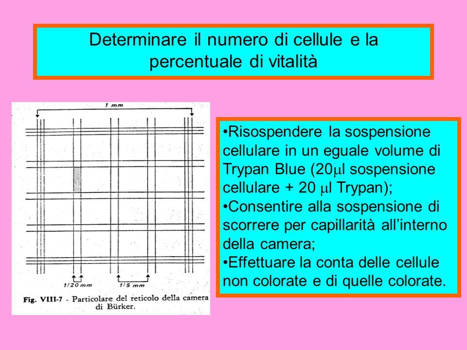 Determinare il numero di cellule e la percentuale di vitalità