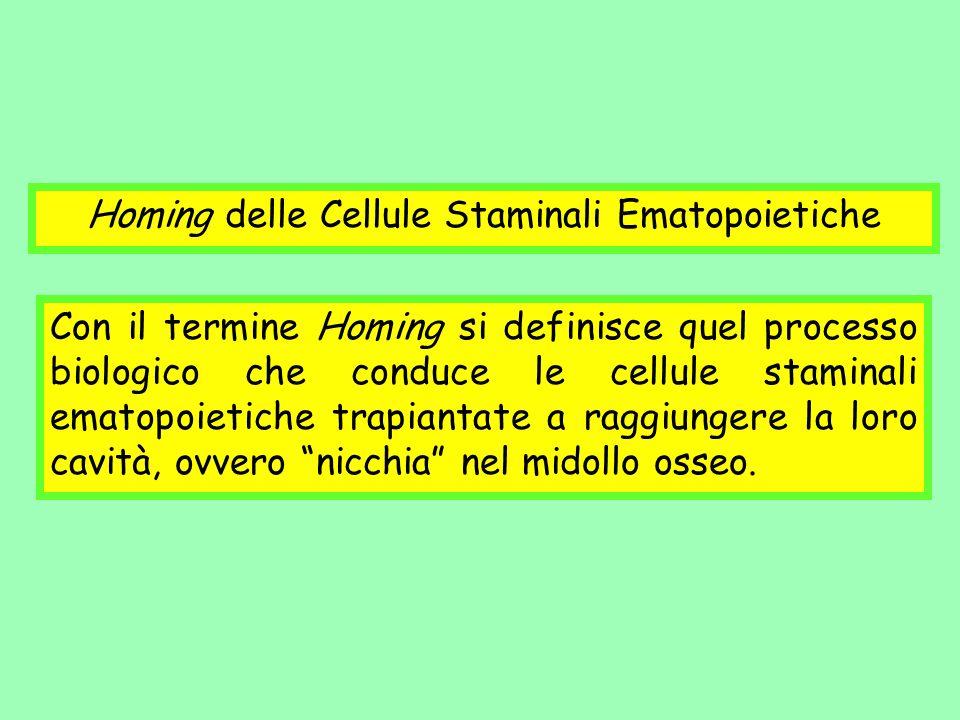 Homing delle Cellule Staminali Ematopoietiche