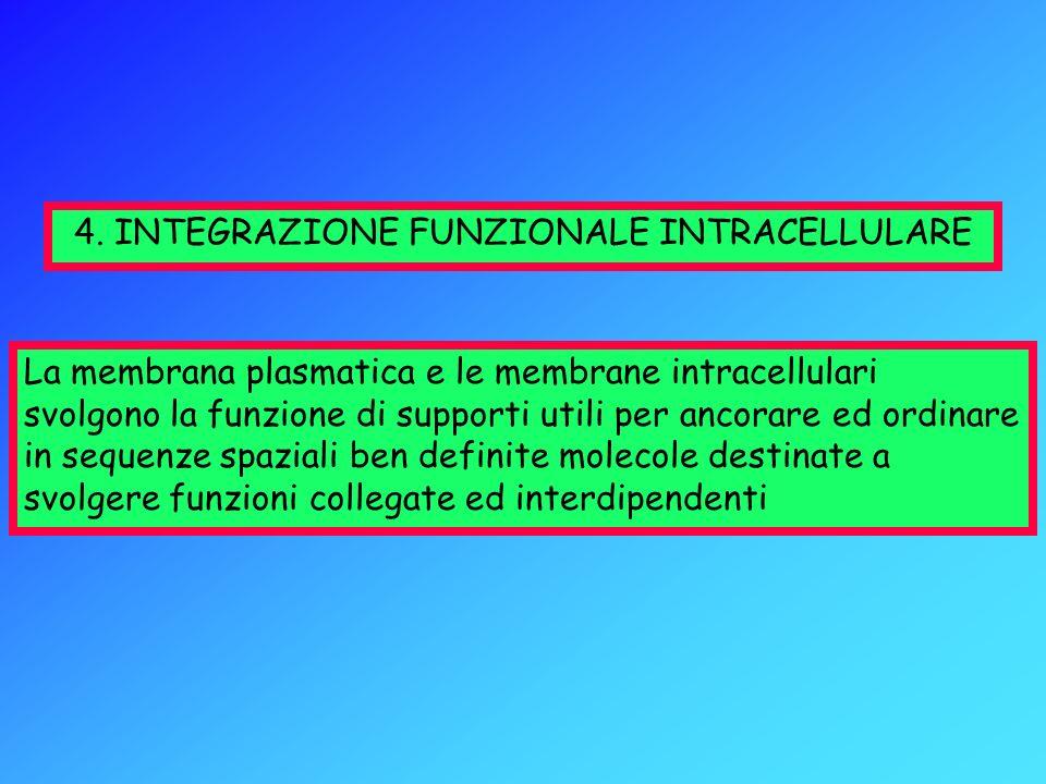 4. INTEGRAZIONE FUNZIONALE INTRACELLULARE