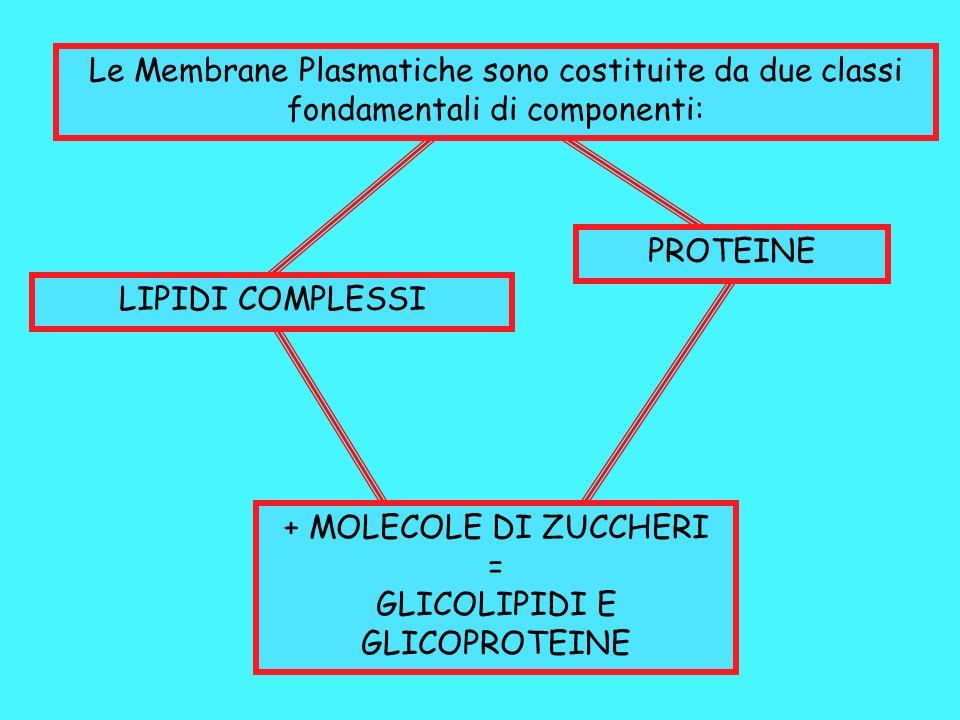 GLICOLIPIDI E GLICOPROTEINE