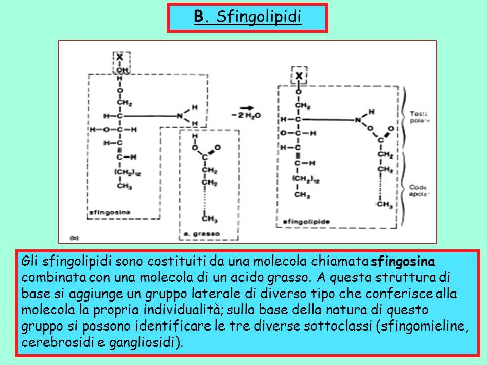 B. Sfingolipidi