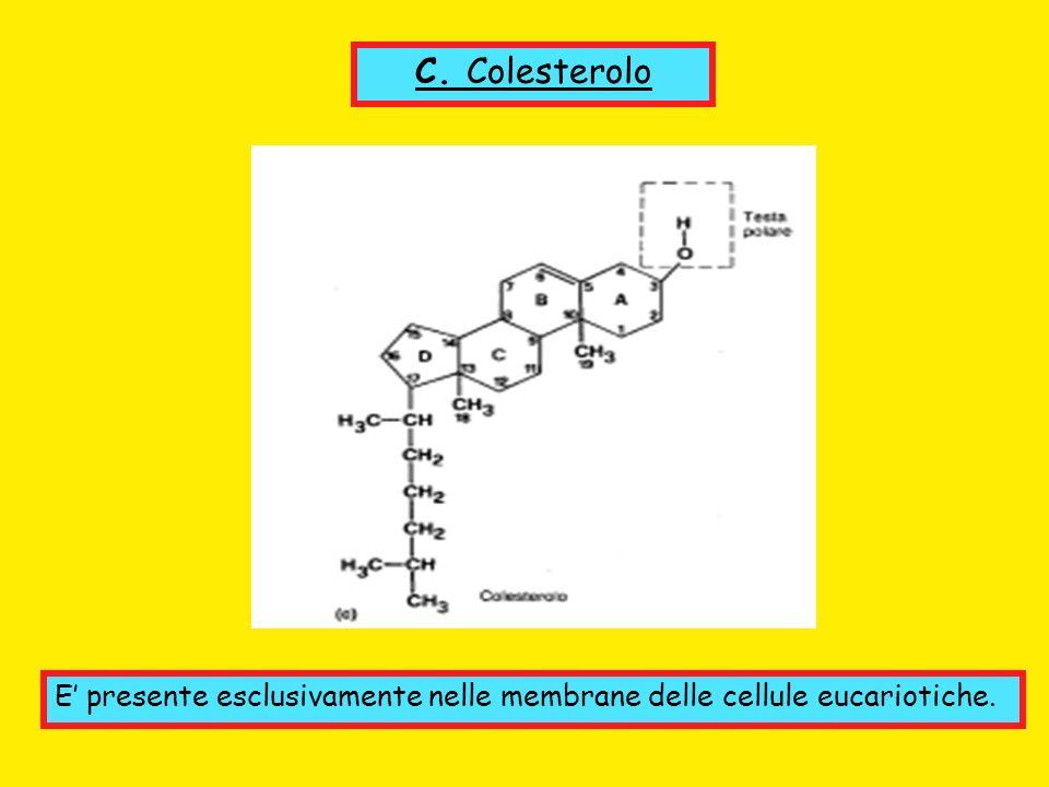 C. Colesterolo E' presente esclusivamente nelle membrane delle cellule eucariotiche.