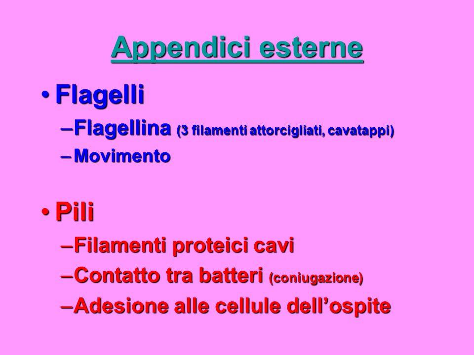 Appendici esterne Flagelli Pili