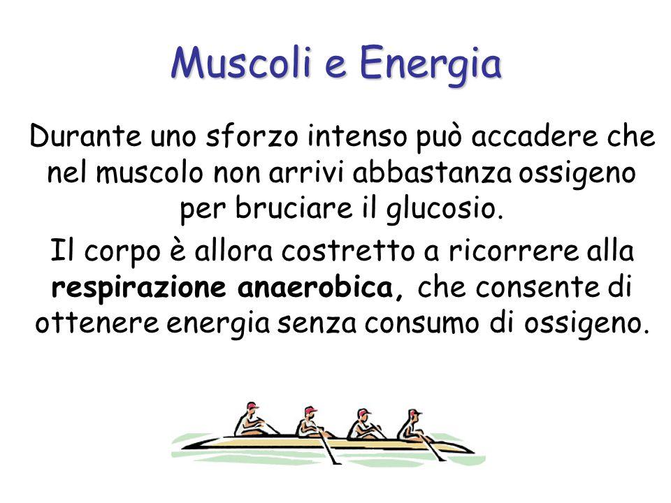 Muscoli e Energia Durante uno sforzo intenso può accadere che nel muscolo non arrivi abbastanza ossigeno per bruciare il glucosio.
