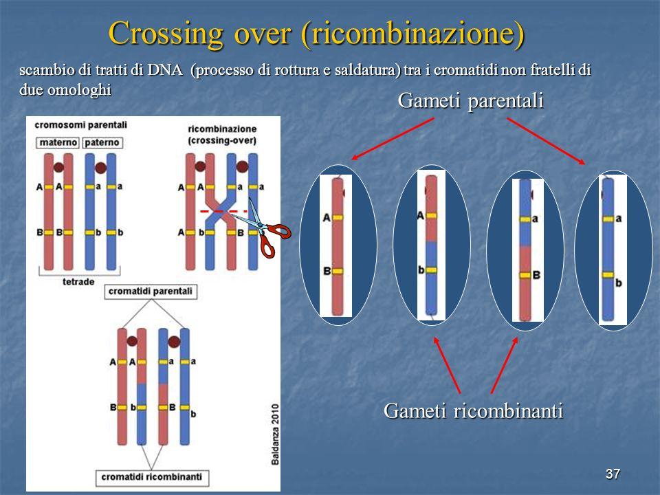 Crossing over (ricombinazione)