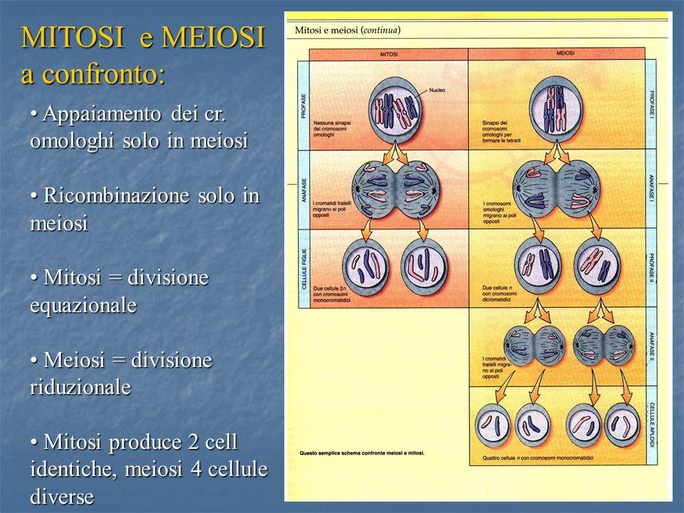 MITOSI e MEIOSI a confronto: