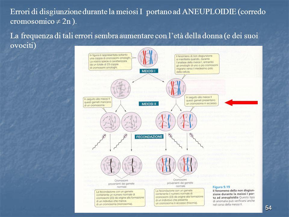 Errori di disgiunzione durante la meiosi I portano ad ANEUPLOIDIE (corredo cromosomico  2n ).