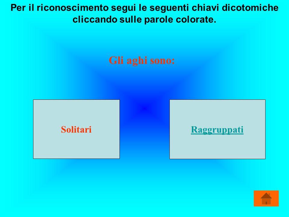 Per il riconoscimento segui le seguenti chiavi dicotomiche cliccando sulle parole colorate.