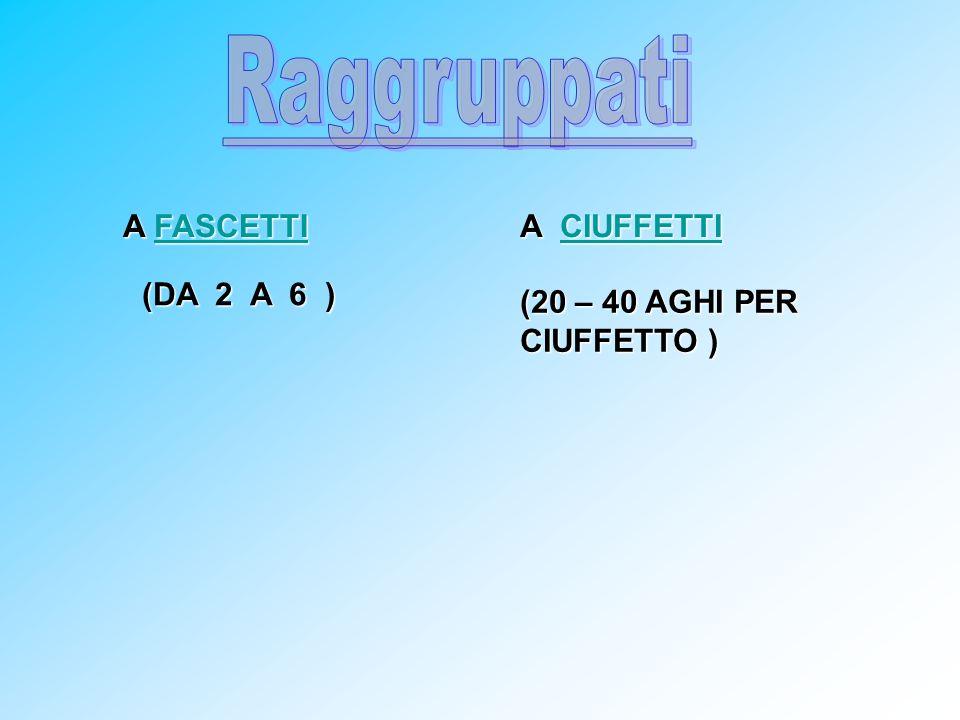 Raggruppati A FASCETTI A CIUFFETTI (DA 2 A 6 )