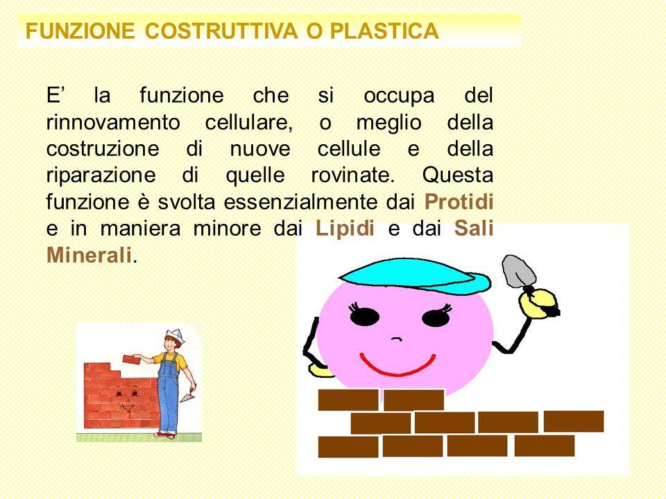 FUNZIONE COSTRUTTIVA O PLASTICA