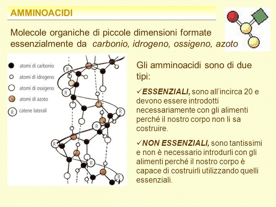 Gli amminoacidi sono di due tipi: