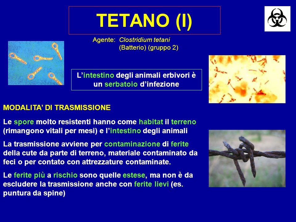 L'intestino degli animali erbivori è un serbatoio d'infezione