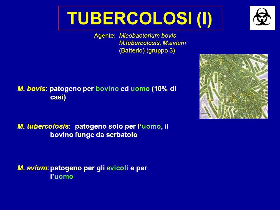 TUBERCOLOSI (I) M. bovis: patogeno per bovino ed uomo (10% di casi)