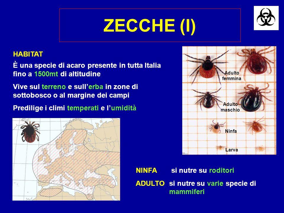 ZECCHE (I) Larva. Adulto maschio. Adulto femmina. Ninfa. HABITAT. È una specie di acaro presente in tutta Italia fino a 1500mt di altitudine.