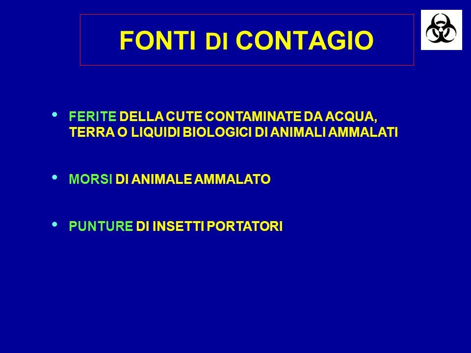 FONTI DI CONTAGIO FERITE DELLA CUTE CONTAMINATE DA ACQUA, TERRA O LIQUIDI BIOLOGICI DI ANIMALI AMMALATI.