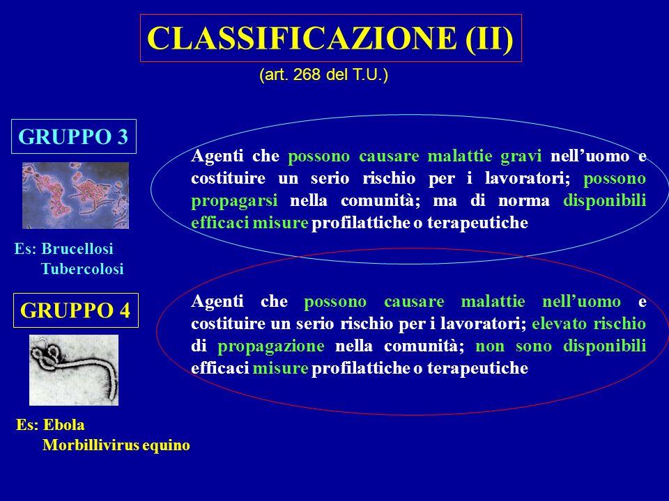 CLASSIFICAZIONE (II) GRUPPO 3 GRUPPO 4