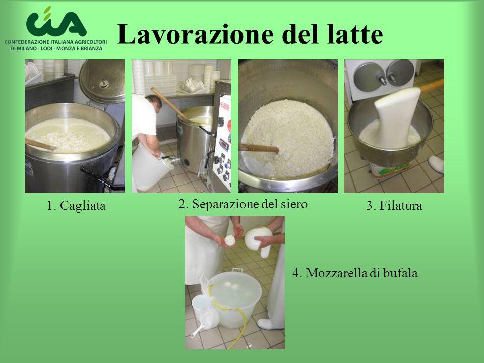 Lavorazione del latte 1. Cagliata 2. Separazione del siero 3. Filatura