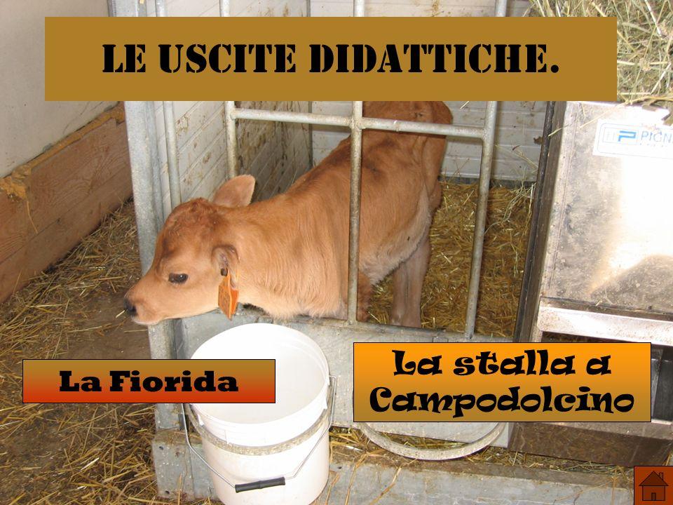 La stalla a Campodolcino