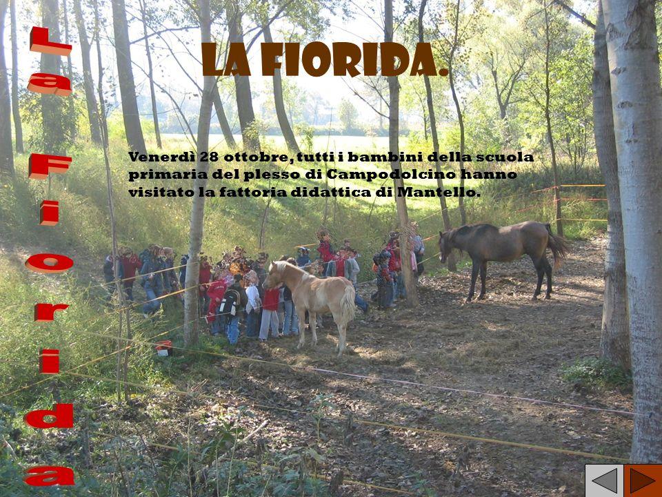 La Fiorida. Venerdì 28 ottobre, tutti i bambini della scuola primaria del plesso di Campodolcino hanno visitato la fattoria didattica di Mantello.
