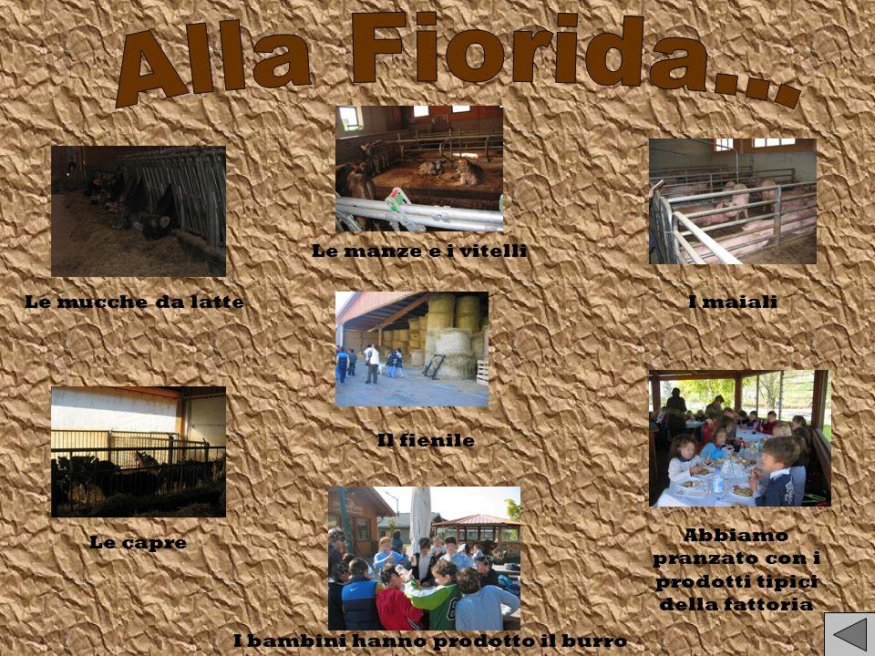 Alla Fiorida... Le manze e i vitelli Le mucche da latte I maiali