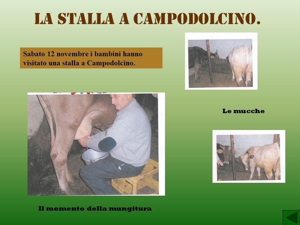La stalla a Campodolcino.