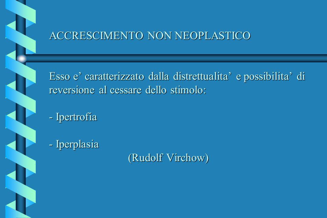 ACCRESCIMENTO NON NEOPLASTICO Esso e' caratterizzato dalla distrettualita' e possibilita' di reversione al cessare dello stimolo: - Ipertrofia - Iperplasia (Rudolf Virchow)