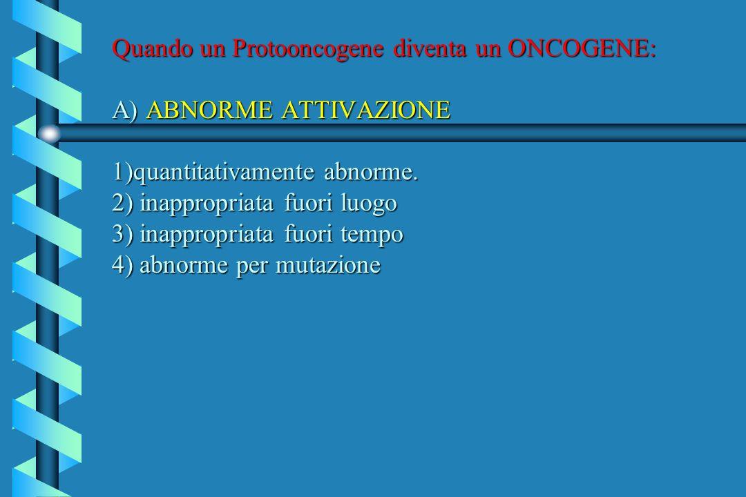 Quando un Protooncogene diventa un ONCOGENE: A) ABNORME ATTIVAZIONE 1)quantitativamente abnorme.