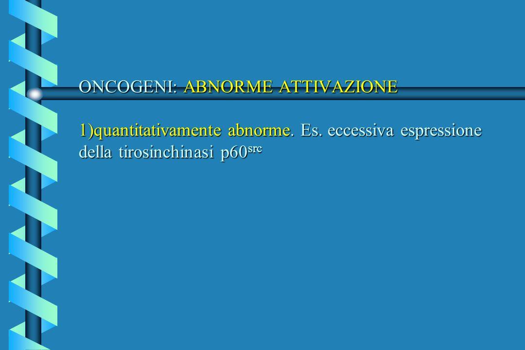 ONCOGENI: ABNORME ATTIVAZIONE 1)quantitativamente abnorme. Es