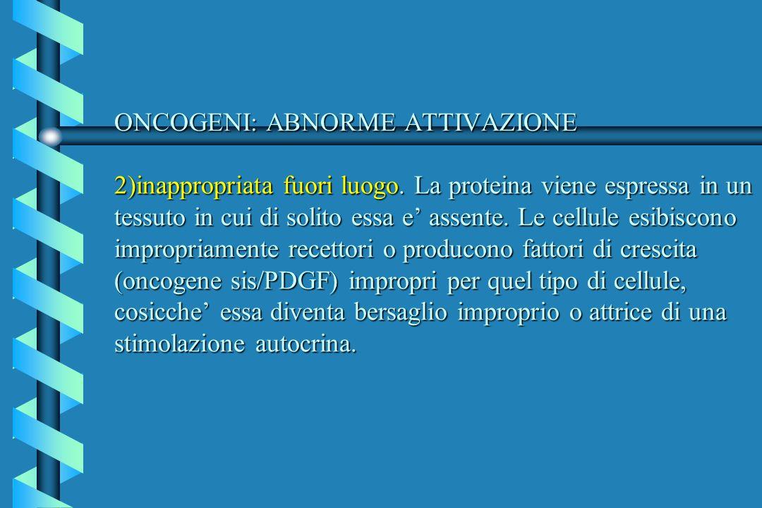 ONCOGENI: ABNORME ATTIVAZIONE 2)inappropriata fuori luogo
