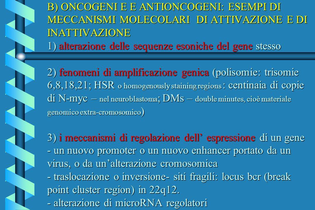 B) ONCOGENI E E ANTIONCOGENI: ESEMPI DI MECCANISMI MOLECOLARI DI ATTIVAZIONE E DI INATTIVAZIONE 1) alterazione delle sequenze esoniche del gene stesso 2) fenomeni di amplificazione genica (polisomie: trisomie 6,8,18,21; HSR o homogenously staining regions : centinaia di copie di N-myc – nel neuroblastoma; DMs – double minutes, cioè materiale genomico extra-cromosomico) 3) i meccanismi di regolazione dell' espressione di un gene - un nuovo promoter o un nuovo enhancer portato da un virus, o da un'alterazione cromosomica - traslocazione o inversione- siti fragili: locus bcr (break point cluster region) in 22q12.