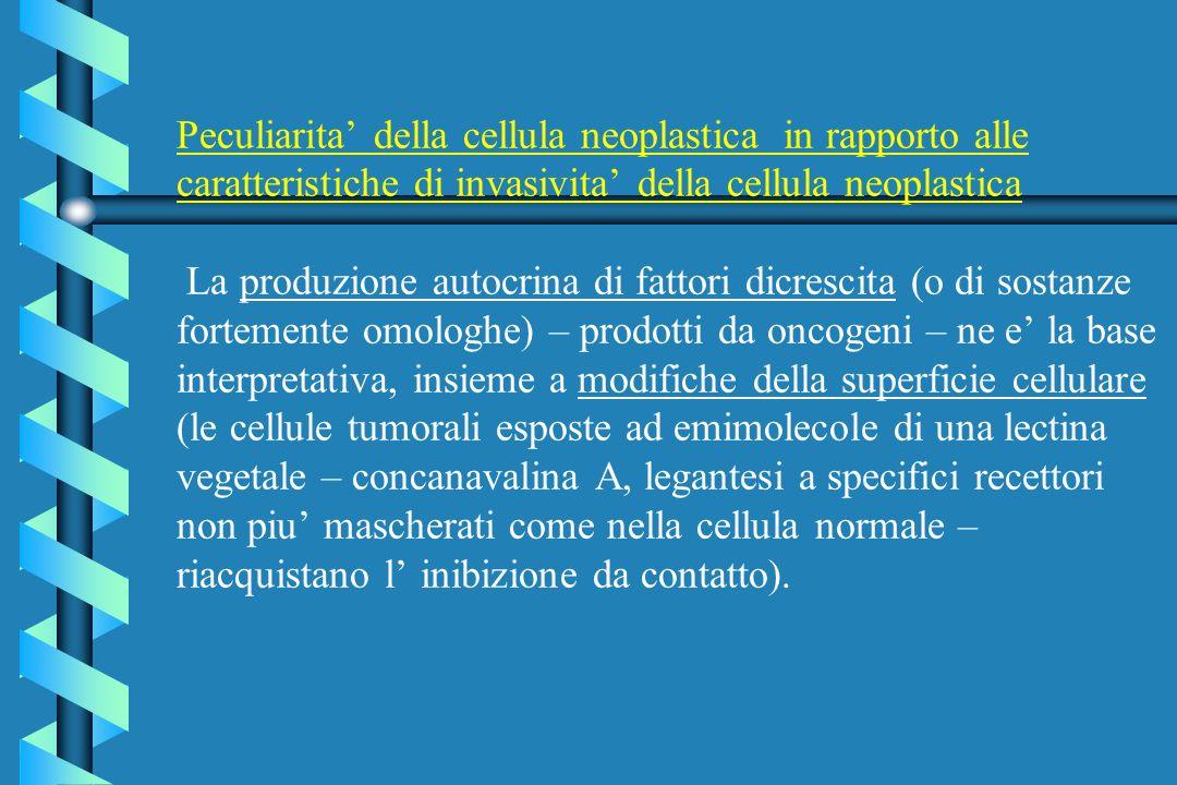 Peculiarita' della cellula neoplastica in rapporto alle caratteristiche di invasivita' della cellula neoplastica La produzione autocrina di fattori dicrescita (o di sostanze fortemente omologhe) – prodotti da oncogeni – ne e' la base interpretativa, insieme a modifiche della superficie cellulare (le cellule tumorali esposte ad emimolecole di una lectina vegetale – concanavalina A, legantesi a specifici recettori non piu' mascherati come nella cellula normale – riacquistano l' inibizione da contatto).