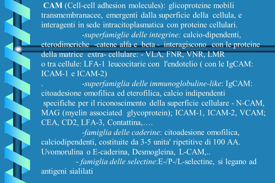 CAM (Cell-cell adhesion molecules): glicoproteine mobili transmembranacee, emergenti dalla superficie della cellula, e interagenti in sede intracitoplasmatica con proteine cellulari.