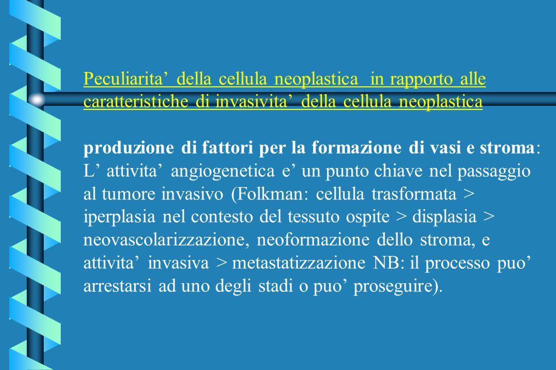 Peculiarita' della cellula neoplastica in rapporto alle caratteristiche di invasivita' della cellula neoplastica produzione di fattori per la formazione di vasi e stroma: L' attivita' angiogenetica e' un punto chiave nel passaggio al tumore invasivo (Folkman: cellula trasformata > iperplasia nel contesto del tessuto ospite > displasia > neovascolarizzazione, neoformazione dello stroma, e attivita' invasiva > metastatizzazione NB: il processo puo' arrestarsi ad uno degli stadi o puo' proseguire).