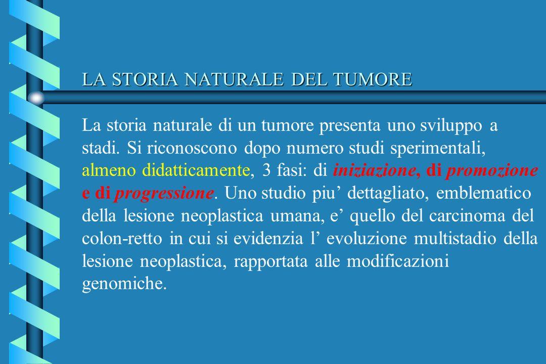 LA STORIA NATURALE DEL TUMORE La storia naturale di un tumore presenta uno sviluppo a stadi.