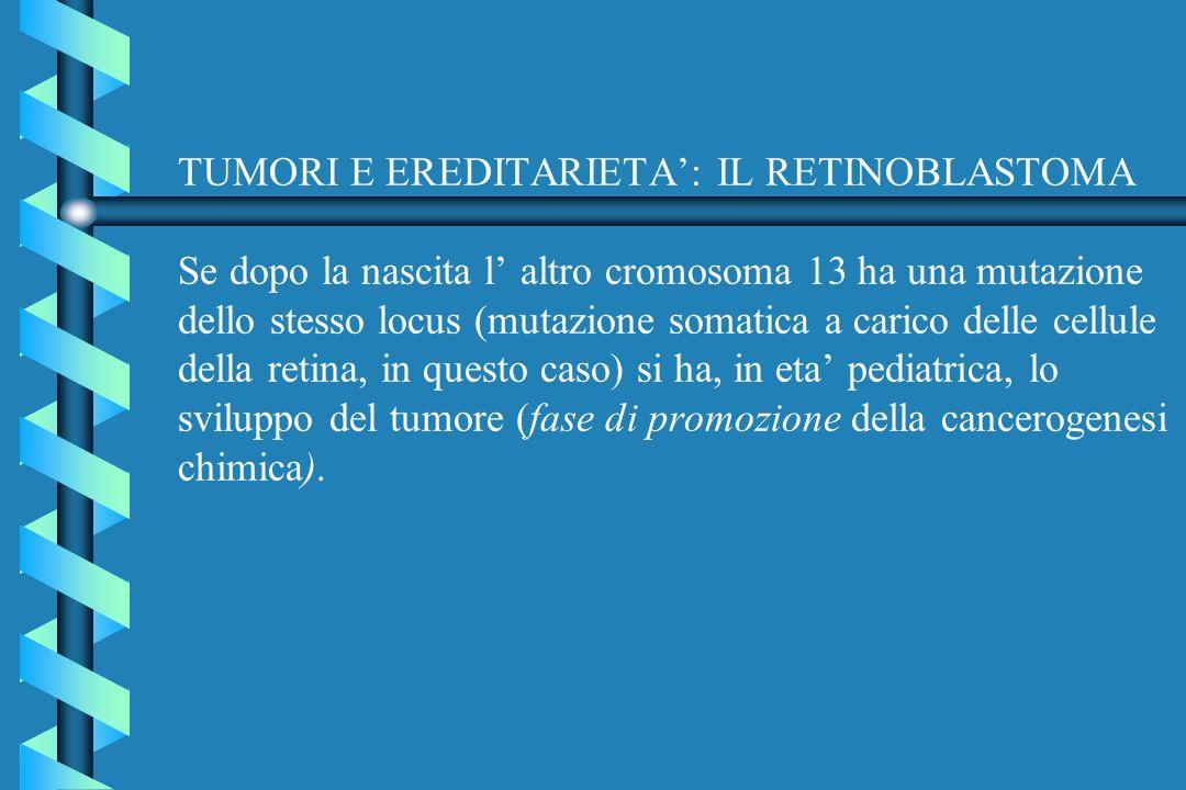 TUMORI E EREDITARIETA': IL RETINOBLASTOMA Se dopo la nascita l' altro cromosoma 13 ha una mutazione dello stesso locus (mutazione somatica a carico delle cellule della retina, in questo caso) si ha, in eta' pediatrica, lo sviluppo del tumore (fase di promozione della cancerogenesi chimica).