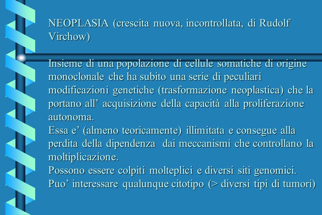 NEOPLASIA (crescita nuova, incontrollata, di Rudolf Virchow) Insieme di una popolazione di cellule somatiche di origine monoclonale che ha subito una serie di peculiari modificazioni genetiche (trasformazione neoplastica) che la portano all' acquisizione della capacità alla proliferazione autonoma.