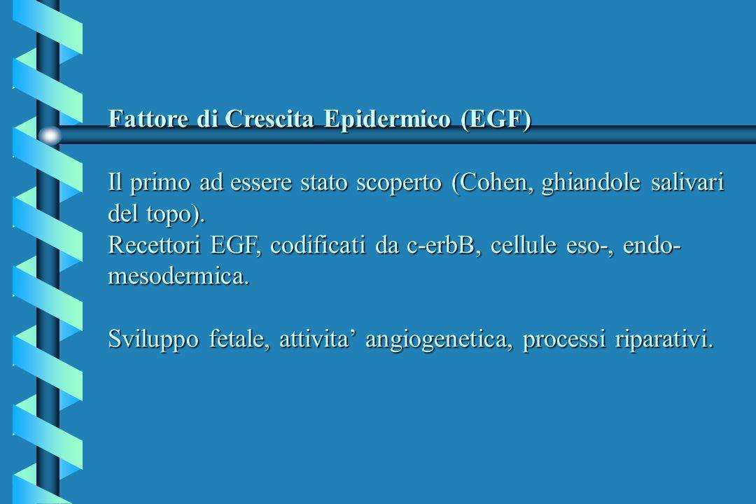 Fattore di Crescita Epidermico (EGF) Il primo ad essere stato scoperto (Cohen, ghiandole salivari del topo).