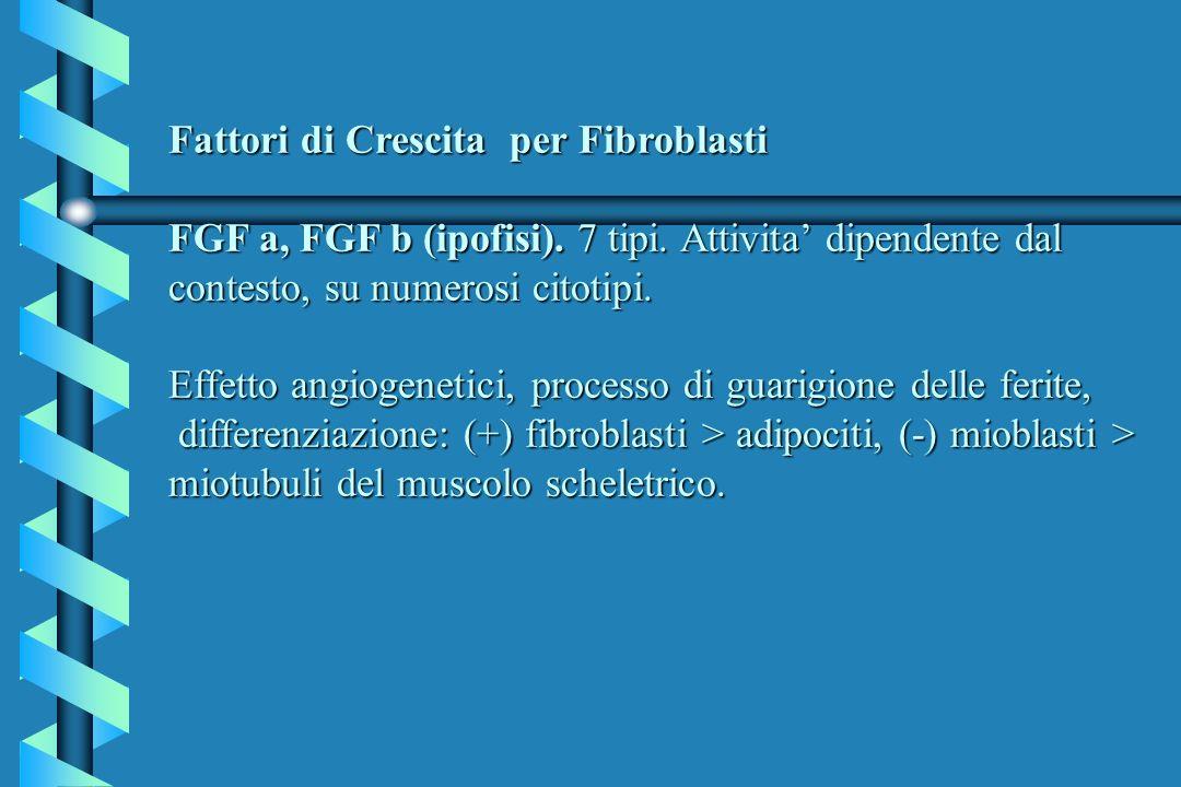 Fattori di Crescita per Fibroblasti FGF a, FGF b (ipofisi). 7 tipi