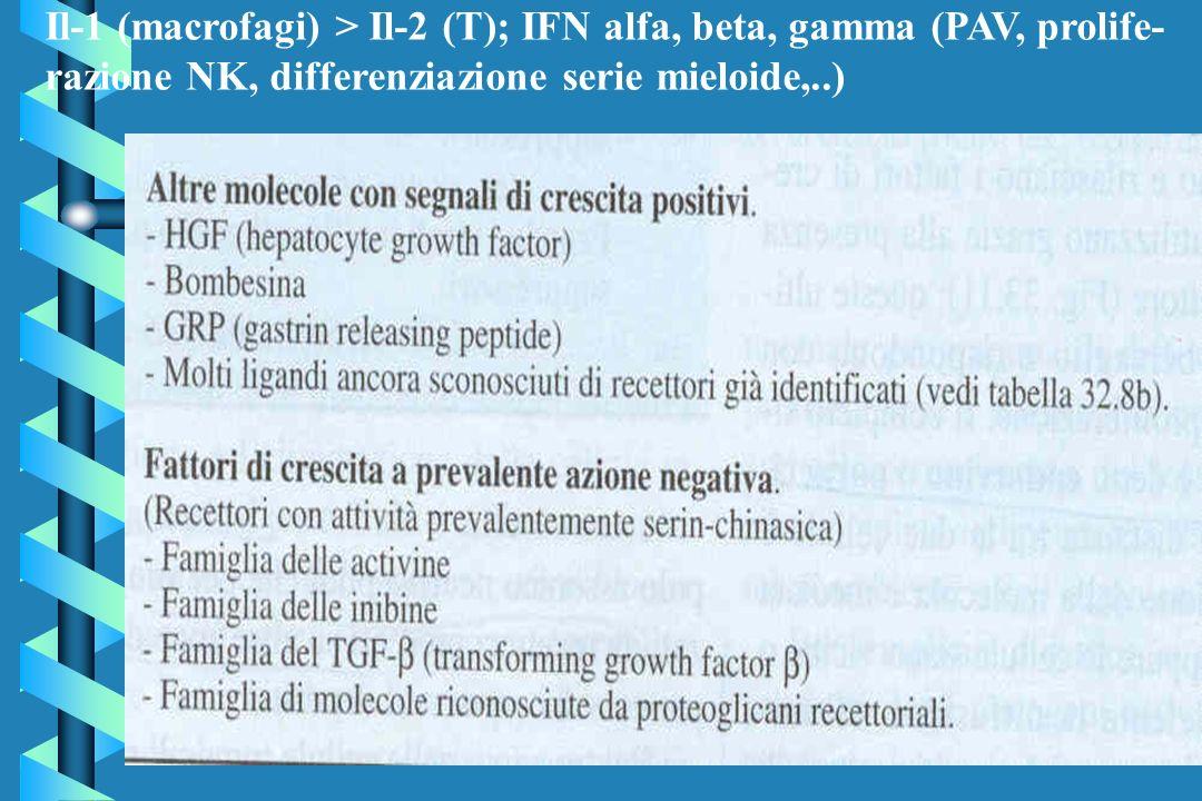 Il-1 (macrofagi) > Il-2 (T); IFN alfa, beta, gamma (PAV, prolife-