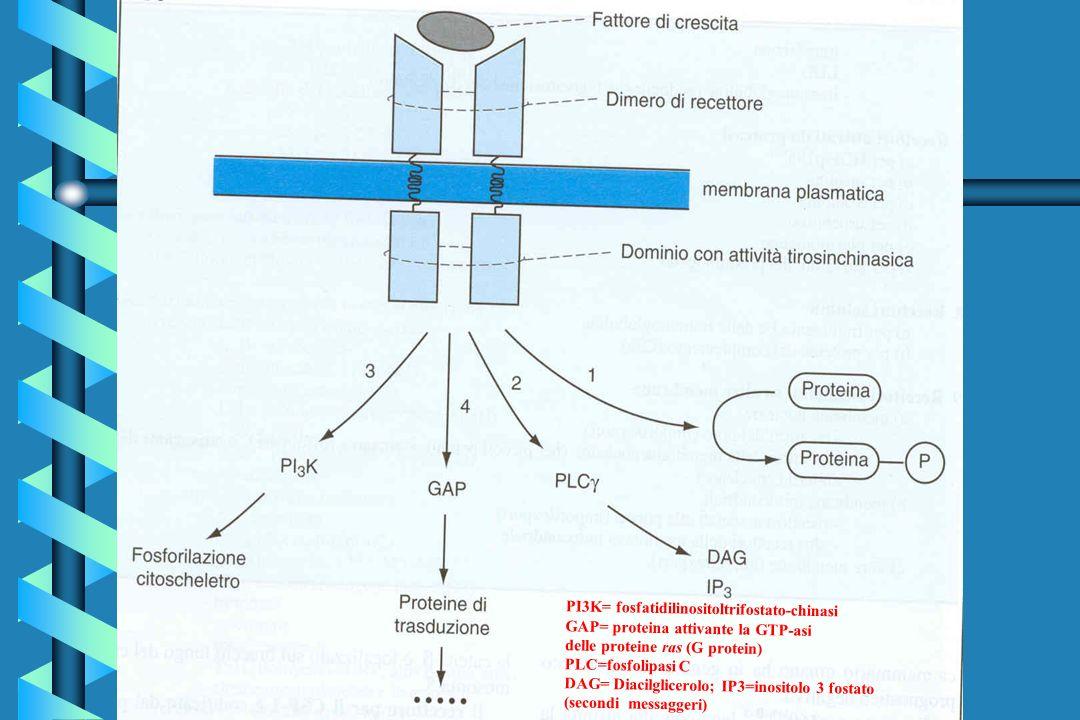 PI3K= fosfatidilinositoltrifostato-chinasi